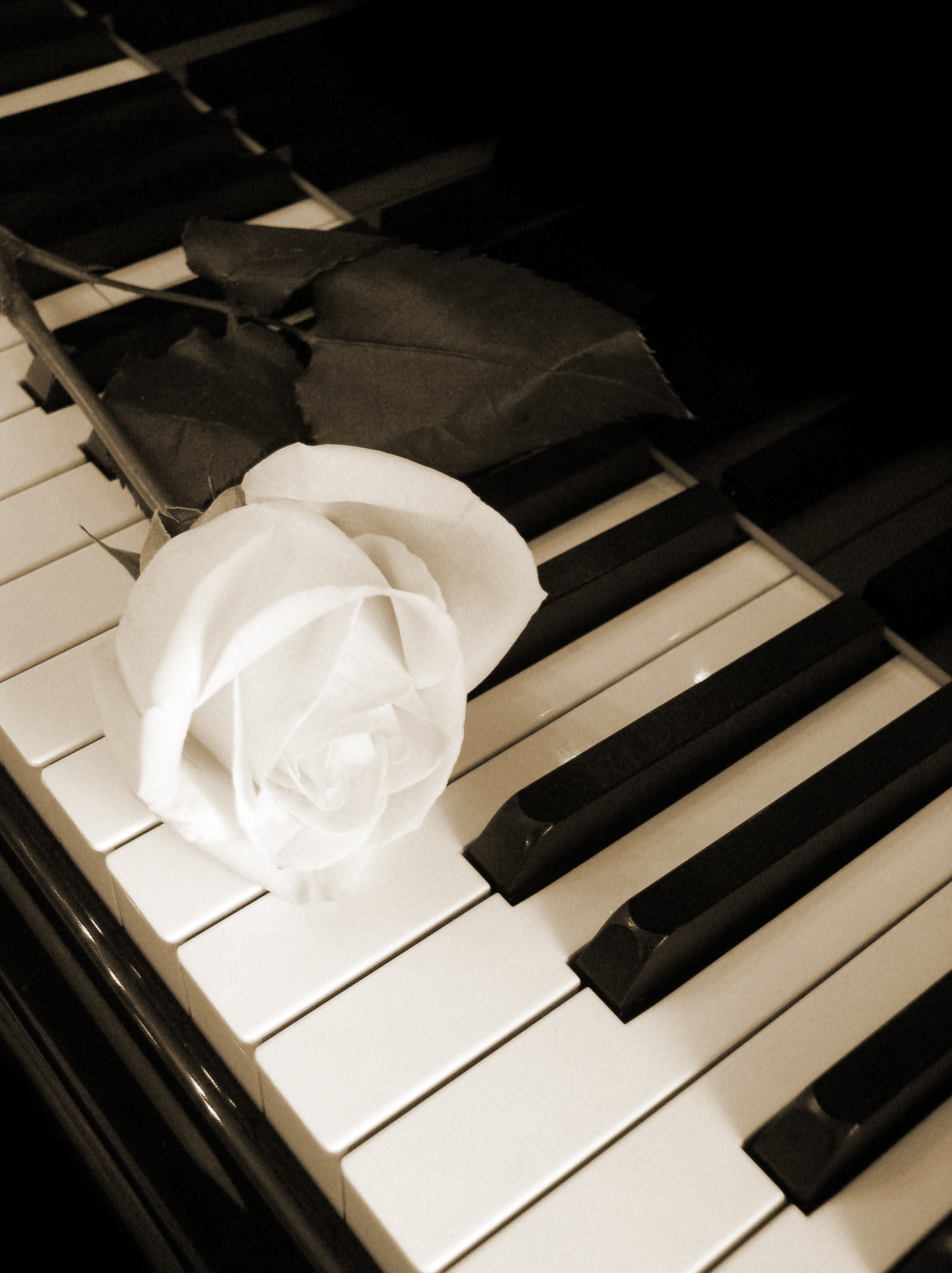 And White Photography Roses On Pianos Black and white photographyPiano With Rose Photography