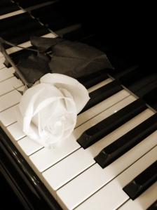 White Rose Piano Keys
